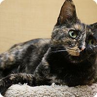 Adopt A Pet :: Isabelle - Salem, NH