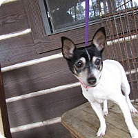 Adopt A Pet :: Zoey - Washington, DC