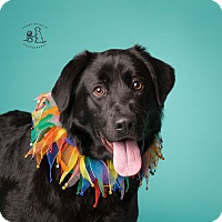 Adopt A Pet :: Jake - Coppell, TX