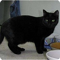 Adopt A Pet :: Fairlane - Belleville, MI