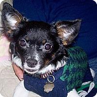 Adopt A Pet :: Binx - Jacksonville, FL