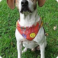 Adopt A Pet :: Rocky - Zebulon, NC