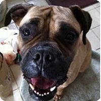 Adopt A Pet :: Jasmine #2 - Phoenixville, PA