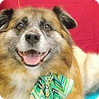 Adopt A Pet :: Raja - Fresno, CA