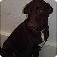 Adopt A Pet :: Buddy C - Cumming, GA