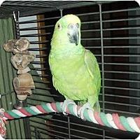 Adopt A Pet :: Harley(2) - Shawnee Mission, KS