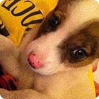 Adopt A Pet :: Luna - Kendall, NY