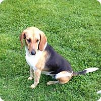 Adopt A Pet :: Little Girl - Medora, IN