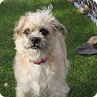 Adopt A Pet :: Barkley - Meridian, ID