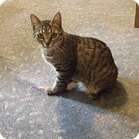 Adopt A Pet :: Atti - Cleveland, OH