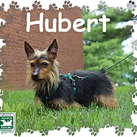 Adopt A Pet :: Hubert - Fallston, MD