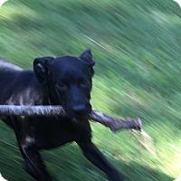 Adopt A Pet :: Callahan - Hixson, TN