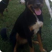 Adopt A Pet :: Smiley - North Brunswick, NJ