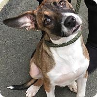 Adopt A Pet :: Linus - Rockaway, NJ
