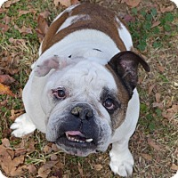 Adopt A Pet :: Bounder - Santa Ana, CA