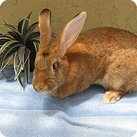 Adopt A Pet :: Chip - Bonita, CA