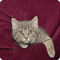 Adopt A Pet :: Betsy - Red Wing, MN