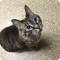 Adopt A Pet :: Jeannie - Medina, OH