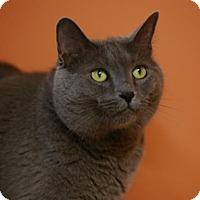 Adopt A Pet :: Kaylee - Kettering, OH