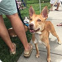 Adopt A Pet :: Wynnie - Charlotte, NC