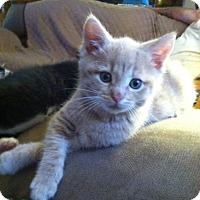 Adopt A Pet :: Cedar - Devon, PA