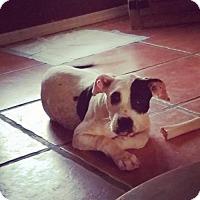 Adopt A Pet :: Elizabeth Ann - PEORIA, AZ
