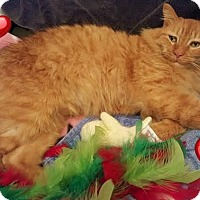 Adopt A Pet :: Archie - Harrisburg, NC