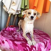 Adopt A Pet :: ELYZA - Elk Grove, CA