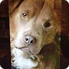 Adopt A Pet :: Bear