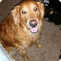 Adopt A Pet :: Vader - New Canaan, CT