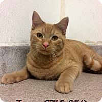 Adopt A Pet :: Leon - Tiffin, OH