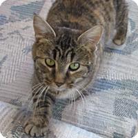 Adopt A Pet :: Karmen - Glenwood, MN