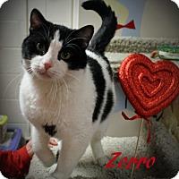 Adopt A Pet :: Zorro - Euclid, OH