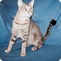 Adopt A Pet :: Hollhy - Colorado Springs, CO