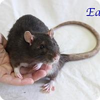 Adopt A Pet :: Earl - Bradenton, FL