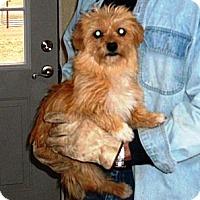 Adopt A Pet :: Goldie - Post, TX
