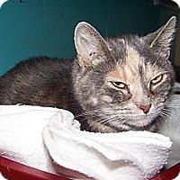 Adopt A Pet :: Leah - Dover, OH