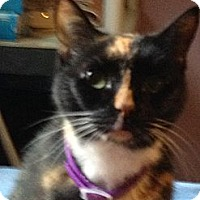 Adopt A Pet :: Nola - Monroe, GA