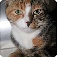 Adopt A Pet :: Juneau - Richboro, PA