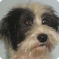 Adopt A Pet :: DALLAS - Mission Viejo, CA