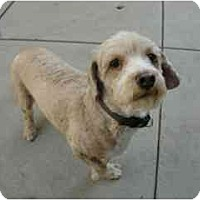 Adopt A Pet :: CoCo - Lake Forest, CA