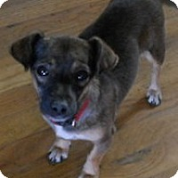 Adopt A Pet :: Pepper - dewey, AZ