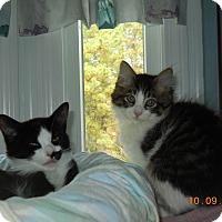 Adopt A Pet :: Benny - CARVER, MA