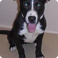 Adopt A Pet :: Jack - Gary, IN