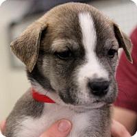 Adopt A Pet :: Dean - Atlanta, GA