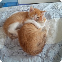 Adopt A Pet :: Karl - Fairborn, OH