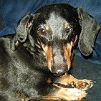 Adopt A Pet :: Ray Roseart - Houston, TX