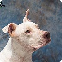 Adopt A Pet :: Tubby - Houston, TX