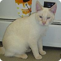 Adopt A Pet :: Gulliver - Hamburg, NY