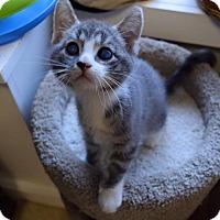 Adopt A Pet :: Penelope - Island Park, NY